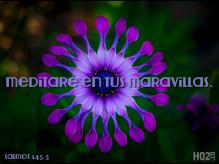 IMG_2478